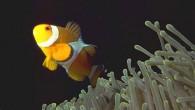Phuket Marine Life Gallery